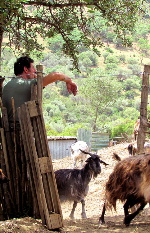 Giulio and his goats