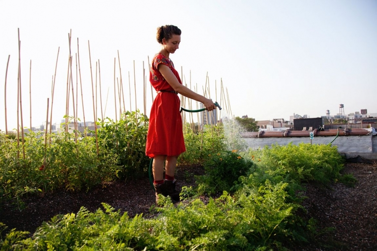 Rooftop Farming in the Big Apple